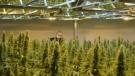 Changes in weed industry
