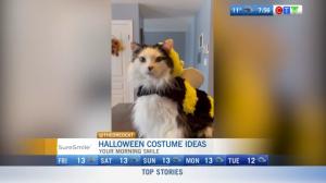morning smile: halloween costume ideas