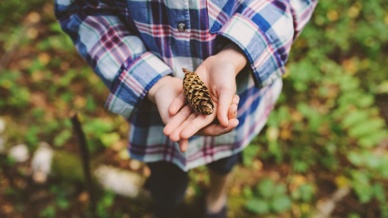 A child is seen in a forest in this undated image. (Shutterstock)