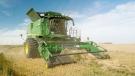 A farmer harvests barley near Hays, Alta. .