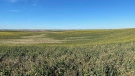 278 acres of Crown land for sale by the Ministry of Agriculture in the RM of Birch Hills. (Lisa Risom/CTV Prince Albert)