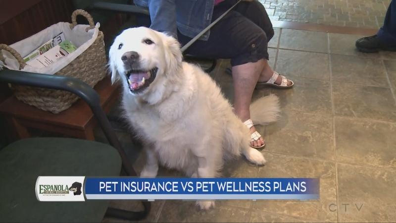A look at pet wellness plans