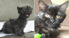 Ashley the kitten finds forever home