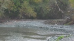 Restoration work finished on Cowichan River