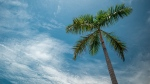 A palm tree is seen in this file photo. (Leonid Danilov/Pexels)