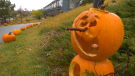 A pumpkin carved for the second annual Pumpkin Walk in Griesbach. Saturday Oct. 23, 2021 (CTV News Edmonton)
