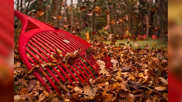 A lot of fall colours in Sandy Hook. Photo by Melissa Tokariwski.