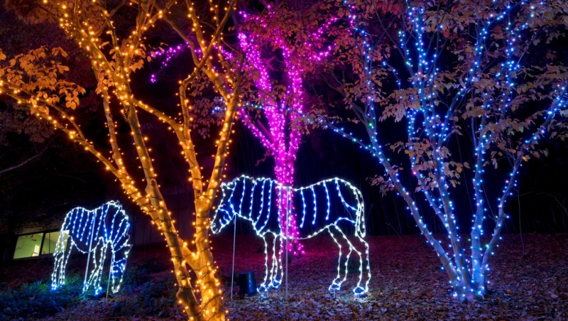 The Calgary Zoo hosts its Zoolights display ever year. (Getty Images)