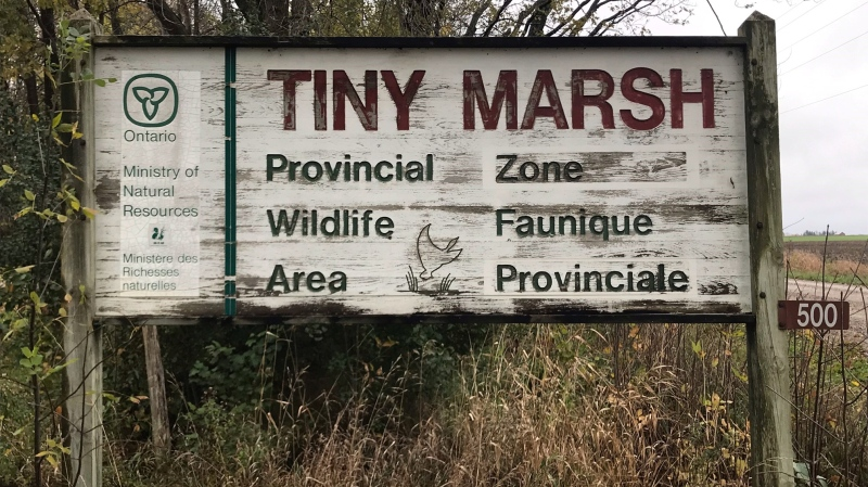 The Tiny Marsh in Tiny Township, Ont., on Tues., Oct. 26, 2021 (Rob Cooper/CTV News)