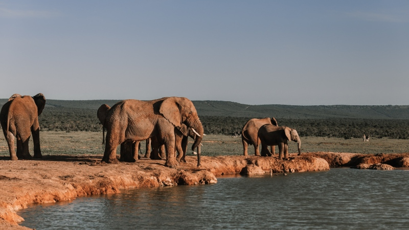 Elephants are seen in this file image. (Pexels)