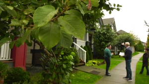 Two neighbours in Surrey face $3,000 fines each after pruning their trees.