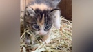 The owners of a pumpkin patch in Langley are disappointed after a pair of seven-week-old kittens were reportedly stolen from their property.