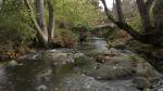 Bowker Creek east of Oak Bay's Monteith Street as seen on October 27, 2021. (CTV News)
