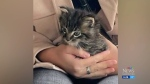 2 kittens stolen