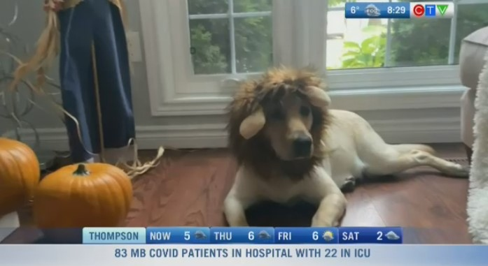 Natalie Sexton's Halloween costumes for pets