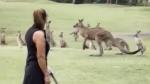 Kangaroos spoil Australian golfer's tee off