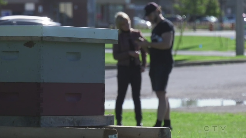 Fields to Forks: 1Hive urban beehives