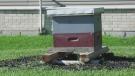 An urban beehive in Komoka, Ont. is part of the new 1Hive push. (Marek Sutherland / CTV News)