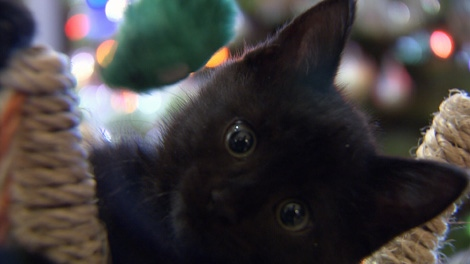 The holidays are a time of year when many people give to the less fortunate, and one group is hoping that generosity will extend to animals in need -- specifically, orphaned kittens.
