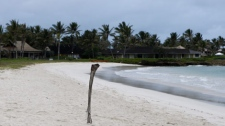 """A palm fron on the beach marks the spot where memebers of the public can""""t past near where President Barack Obama, first lady Michelle Obama, and daughters Sasha and Malia are having their holiday vacation in Kailua, Hawaii., Thursday, Dec. 24, 2009. (AP Photo/Chris Carlson)"""