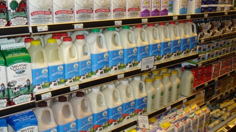 export milk products egypt We also export fresh milk products which are produced in our subsidiary company lukšių pieninė the high quality and the wonderful taste of milk products is the main principle of the company's activity.