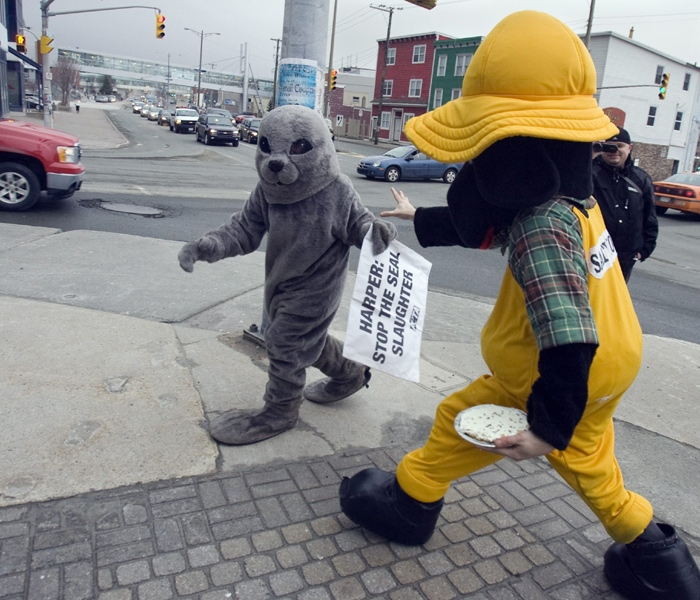 Emily Lavender from the animal rights group, People for the Ethical Treatment of Animals, is chased by an unidentified man dressed in a local mascot's outfit, a dog with a rain slicker and a sou'wester, in St. John's, N.L. on Friday, Jan. 29, 2010. (Andrew Vaughan / THE CANADIAN PRESS)