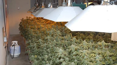 Mounties say a grow-op bust in OK Falls, B.C., yielded more than 2,000 marijuana plants, with a street value of roughly $2-million. March 13, 2010. (RCMP handout)