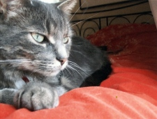 Morry, the cat, has been missing since a fire tore through an apartment building on Monk Street in the Glebe this weekend. His owners are hoping he escaped the flames.
