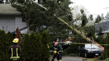 Firefighters wait for B.C. Hydro crews to arrive after high winds toppled a tree and sent it crashing into a car and house in Delta, B.C., on Friday April 2, 2010. (Darryl Dyck / THE CANADIAN PRESS)