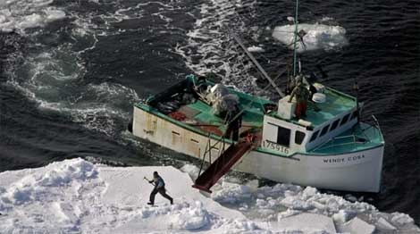A hunter heads towards a harp seal during the annual seal hunt in the southern Gulf of St. Lawrence on Wednesday, March 25, 2009. (Andrew Vaughan / THE CANADIAN PRESS)