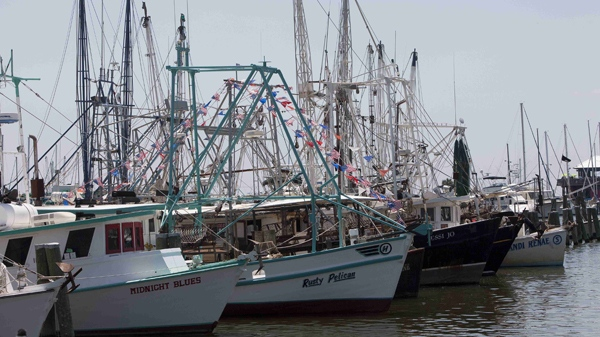 Shrimp boats sit in the Pass Christian Harbour in Pass Christian, Miss., Wednesday, May 5, 2010. U.S. federal officials are investigating if shrimpers and other fishermen may be responsible for recent turtle deaths along the Gulf coast. (AP / Dave Martin)