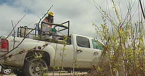 A City of Winnipeg crew sprays for mosquitoes on Thursday.