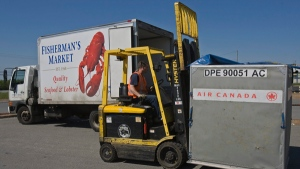 A worker moves a shipping container at an Air Canada cargo facility in Halifax on Monday, May 24, 2010. (Andrew Vaughan / THE CANADIAN PRESS)