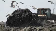Sand is pumped from 20,000 feet offshore to build barriers meant to keep oil from entering wetlands near Grand Isle, La., Thursday, May 27, 2010. (AP / Jae C. Hong)
