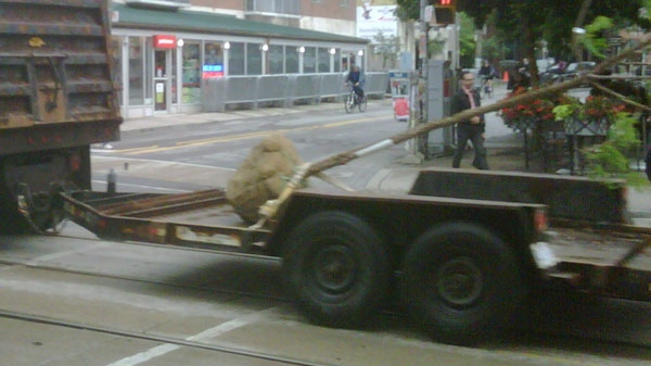 Trees are removed from the G20 summit security zone on Wednesday, June 16, 2010 so protestors cannot use tree limbs as weapons. (CTV)