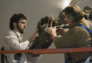 Dr. David Evans (left), ROM Associate Curator of Vertebrate Palaeontology, and Peter May, President of Research Casting International, attach the head to the ROM's Barosaurus skeleton in Toronto on Tuesday, Dec. 11, 2007. (THE CANADIAN PRESS/Frank Gunn)
