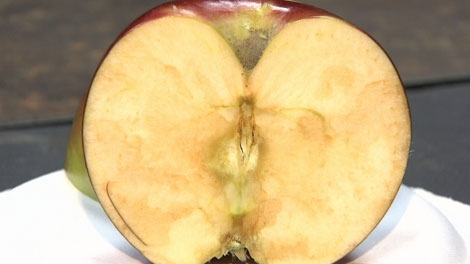 Okanagan Specialty Fruits has developed an apple that won't turn brown like this Spartan did. May 16, 2012. (CTV)