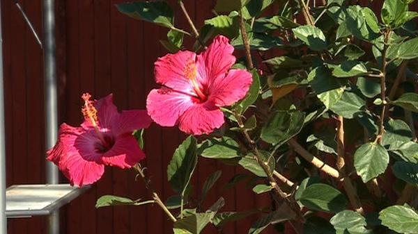 mark cullen on tropical plants