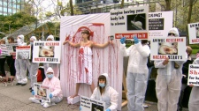 Stop UBC Animal Research held a demonstration to protest animal testing on June 3 in Vancouver, B.C. (CTV)
