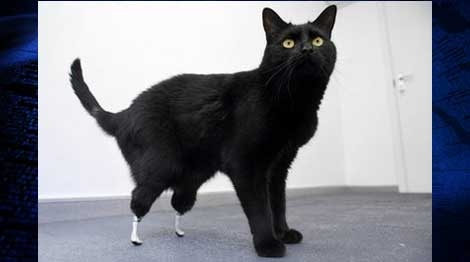 Oscar the cat lands on his feet with bionic paws  49b48eec4
