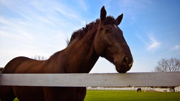A horse stands by a fence in this file photo.