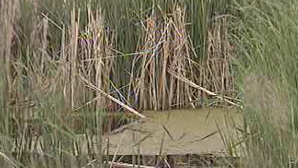 Two Manitobans became lost in a marsh.