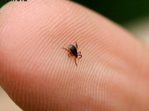 Ticks carrying Lyme disease spreading across Canadian landscape