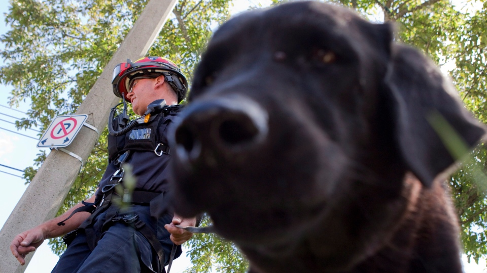An OPP officer walks his dog trained to search for people as part of an urban rescue unit, outside the Algo Centre Mall, in Elliot Lake, Ontario on Tuesday, June 26, 2012.  (Chris Young / THE CANADIAN PRESS)