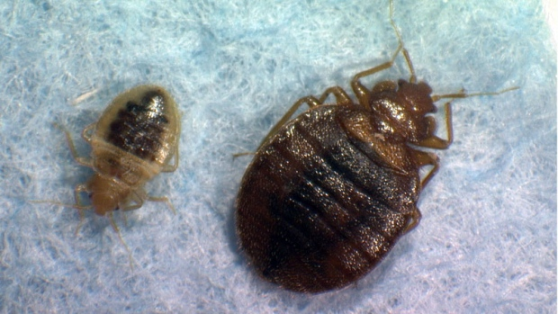 Scientists Map Bedbug Dna Follow Pest Through Nyc Subway Ctv News