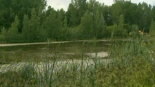 A suspicious object was found in Angrignon Park in Que., on Sunday, July 1, 2012.