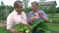 Mark Cullen offers Canada AM advice on how to grow your own vegetables