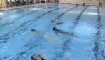 People swim in a swimming pool