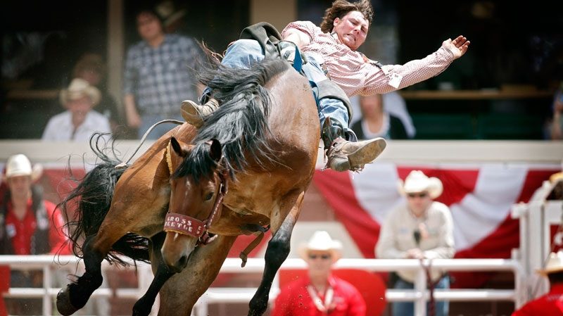Novice bareback rider Royden Griffith, from Cadogan, Alta., hangs onto Uranium Rocket during rodeo action at the Calgary Stampede in Calgary, Friday, July 6, 2012. (Jeff McIntosh / THE CANADIAN PRESS)