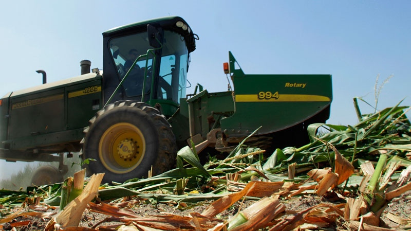 Steve Niedbalski is seen chopping down his drought and heat stricken corn for feed in Nashville, Illinois, Wednesday, July 11, 2012. (AP / Seth Perlman)